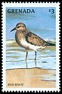 Cl: Red Knot (Calidris canutus) SG 3602 (1998)