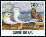 Cl: Iceland Gull (Larus glaucoides)(Out of range)  new (2011)  [7/31]