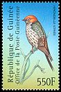 Cl: Lesser Striped-Swallow (Cecropis abyssinica) <<Hirondelle stri&eacute'e>>  new (2001)