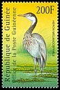 Cl: Black-headed Heron (Ardea melanocephala) new (2001)