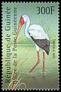 Cl: Yellow-billed Stork (Mycteria ibis) <<Tantale ibis>>  new (2001)