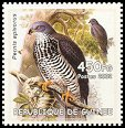 Cl: European Honey-buzzard (Pernis apivorus) new (2002)