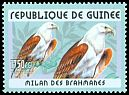 Cl: Brahminy Kite (Haliastur indus) <<Milan des Brahmanes>> (Out of range)  new (2001)