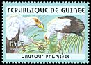 Cl: Palm-nut Vulture (Gypohierax angolensis) <<Vautour palmiste>>  new (2001)