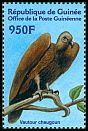 Cl: White-backed Vulture (Gyps africanus) <<Vautour chaugoun>>  new (2001)