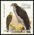 Cl: Northern Goshawk (Accipiter gentilis)(Out of range)  new (2002)  [2/10]