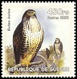 Cl: Eurasian Buzzard (Buteo buteo)(Out of range)  new (2002)  [2/10]