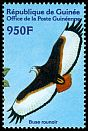 Cl: Jackal Buzzard (Buteo rufofuscus) <<Buse rounoir>> (Out of range)  new (2001)