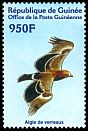 Cl: Tawny Eagle (Aquila rapax) new (2001)