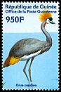 Cl: Grey Crowned-Crane (Balearica regulorum) <<Grue cendr&eacute;e!>> (Out of range)  new (2001)