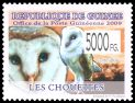 Cl: Barn Owl (Tyto alba)(Repeat for this country)  new (2010)