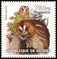 Cl: Tawny Owl (Strix aluco)(Out of range)  new (2002)