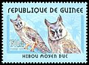 Cl: Northern Long-eared Owl (Asio otus) <<Hibou moyen duc>> (Out of range)  new (2001)
