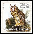 Cl: Northern Long-eared Owl (Asio otus)(Out of range)  new (2002)