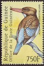 Cl: Chocolate-backed Kingfisher (Halcyon badia) new (2001)