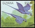Cl: Hyacinth Macaw (Anodorhynchus hyacinthinus)(Out of range)  SG 3031 (1990)