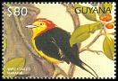Cl: Wire-tailed Manakin (Pipra filicauda)(Out of range)  SG 5124 (1997)