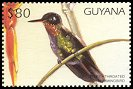 Cl: Fiery-throated Hummingbird (Panterpe insignis)(Out of range and no other stamp)  SG 5132 (1997)