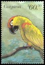 Cl: Thick-billed Parrot (Rhynchopsitta pachyrhyncha)(Out of range)  SG 5652 (1999)