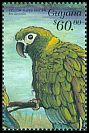 Cl: Golden-collared Macaw (Primolius auricollis)(Out of range)  SG 5654 (1999)
