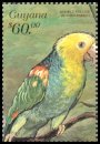 Cl: Yellow-headed Parrot (Amazona oratrix)(Out of range)  SG 5655 (1999)