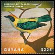 Cl: Burnished-buff Tanager (Tangara cayana) SG 6841d (2013)