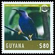 Cl: Purple Honeycreeper (Cyanerpes caeruleus) new (2014)