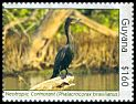 Cl: Neotropic Cormorant (Phalacrocorax brasilianus) new (2012)  [7/62]