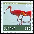Cl: Scarlet Ibis (Eudocimus ruber)(Repeat for this country)  new (2014)