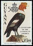 Cl: Andean Condor (Vultur gryphus)(Out of range) (not catalogued)  (1991)