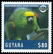 Cl: Yellow-crowned Parrot (Amazona ochrocephala) new (2014)