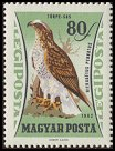 Cl: Booted Eagle (Aquila pennata)(Repeat for this country)  SG 1854 (1962) 25