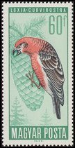 Cl: Red Crossbill (Loxia curvirostra)(Repeat for this country)  SG 2186 (1966) 10