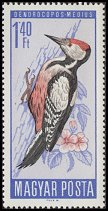 Cl: Middle Spotted Woodpecker (Dendrocopos medius) SG 2187 (1966) 30