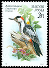 Cl: Syrian Woodpecker (Dendrocopos syriacus) <<Balk&aacute;ni fakop&aacute;ncs>>  SG 3962 (1990) 65