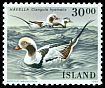 Cl: Long-tailed Duck (Clangula hyemalis) <<Hávella>>  SG 721 (1988) 140