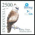 Cl: Flores Hawk-Eagle (Spizaetus floris) <<Elang Flores>>  new (2012)