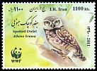 Cl: Spotted Owlet (Athene brama) new (2011)  [7/41]