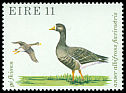 Cl: Greater White-fronted Goose (Anser albifrons)(Repeat for this country)  SG 444 (1979) 45