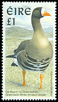 Cl: Greater White-fronted Goose (Anser albifrons) SG 1060 (1996) 175