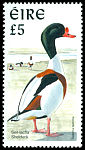 Cl: Common Shelduck (Tadorna tadorna) SG 1062 (1997) 900