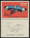 Cl: White-throated Kingfisher (Halcyon smyrnensis) SG 245 (1963) 15