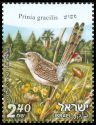 Cl: Graceful Prinia (Prinia gracilis) SG 1983 (2010)