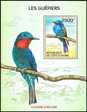 Cl: Blue-headed Bee-eater (Merops muelleri) new (2014)  [9/9]