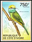 Cl: Green Bee-eater (Merops orientalis) new (2014)  [9/9]