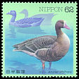 Cl: Greater White-fronted Goose (Anser albifrons) SG 2247 (1993)