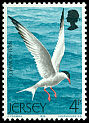 Cl: Common Tern (Sterna hirundo) SG 129 (1975) 15