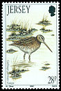 Cl: Common Snipe (Gallinago gallinago) SG 570 (1992)
