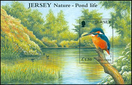 Cl: Common Kingfisher (Alcedo atthis) SG 997 (2001)
