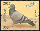 Cl: Rock Pigeon (Columba livia)(Repeat for this country)  new (2017)